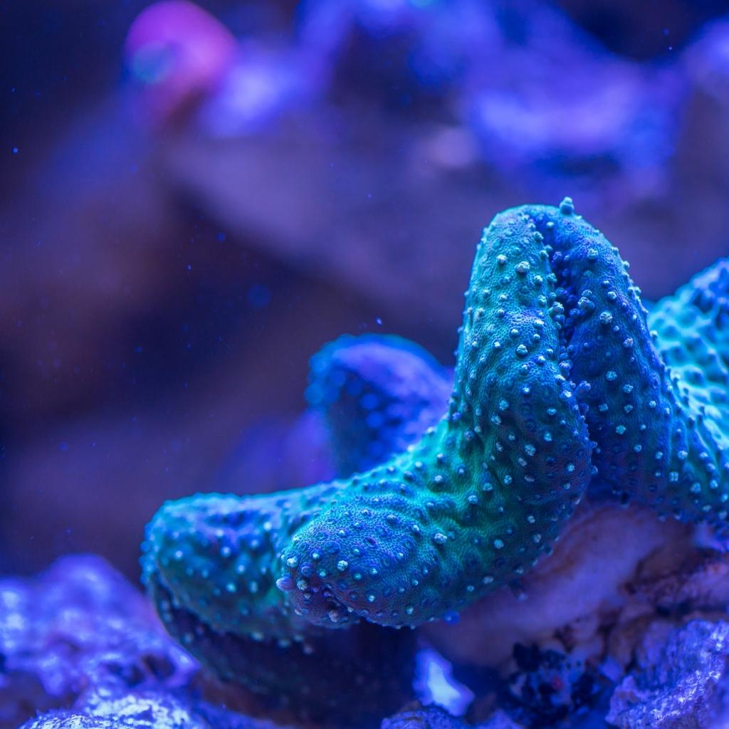 aquarium-coral-deep-920162